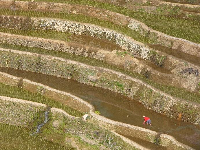 rizières ifugao