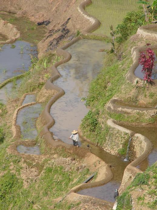 rizières philippines