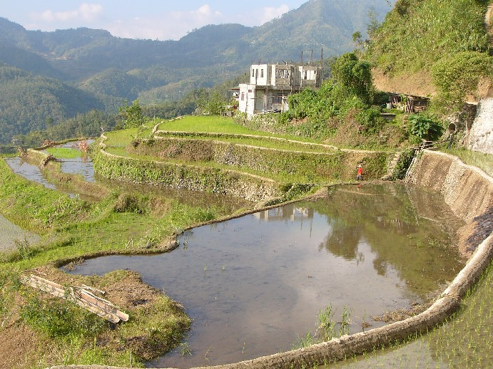 rizières banaue